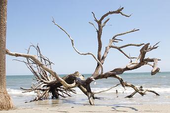 bois-flotte-eau-rivage